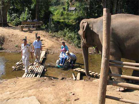 Elephants watch as Nancy travels across a creek in Thailand